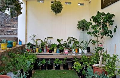 Green House plant shop (2)-H900